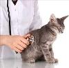 Ветеринарные клиники в Очере
